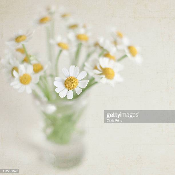 Tiny white daisies in a glass vase