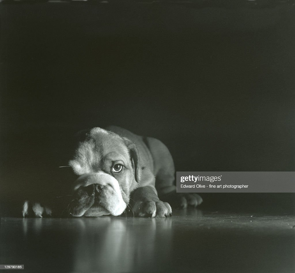 Tired little doggy : Stock Photo
