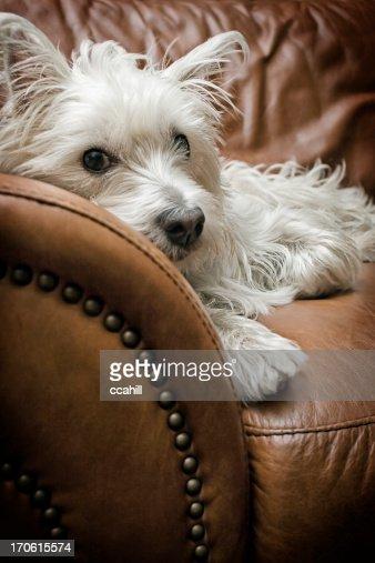 Tired Puppy