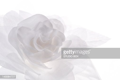 Tissue rose