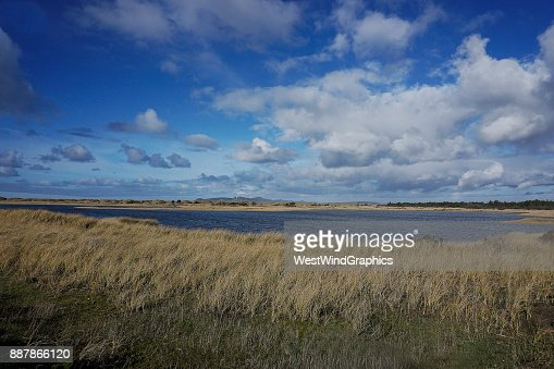 tital pond and beach grass : Stock Photo