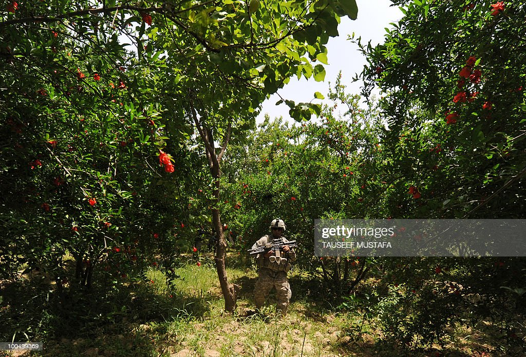 To go with Afghanistan-unrest-economy-Kandahar-Taliban,FEATURE by Lynne O'Donnell In this picture taken on May 8, 2010, a US soldier from 2nd Platoon Bravo Company 5/2 ID Stryker Brigade Combat Team (SBCT) 1-17 Infantry Batallion patrols through pomegranate trees at Shahwali kot. Lush pomegranate orchards provide perfect cover for the Taliban, who have turned what should be the fruit basket of Afghanistan into one of the hottest spots of the long insurgency. AFP Photo/Tauseef MUSTAFA