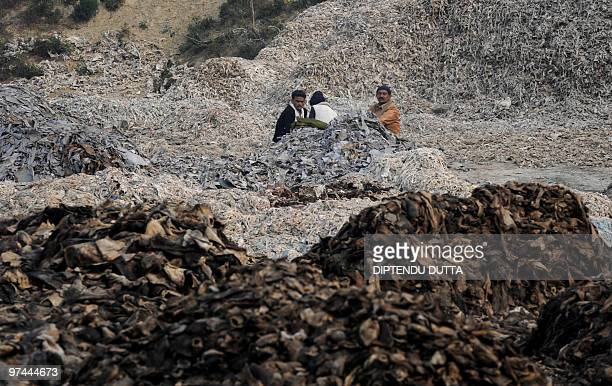 To go with AFP story by Yasmeen Mohiuddin INDIAINDUSTRYPOLLUTIONWATERLEATHER Indian labourers work in a leather tannery in Kanpur on January 13 2010...