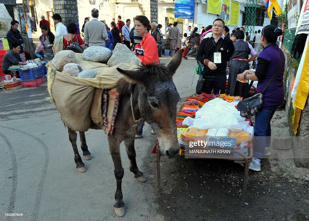 To go with AFP story 'India-Tibet-travel-tourism-religion,FEATURE' by Ben Sheppard This picture taken on September 25, 2012 shows a donkey carrying boulders to a nearby construction site through the market in McLeod Ganj, Dharamshala. Once the refuge of pious Tibetan monks and a few hippie travellers, Dharamshala in the Himalayan foothills is today a crowded and chaotic town where long-term residents fear for its future. AFP PHOTO / Manjunath KIRAN