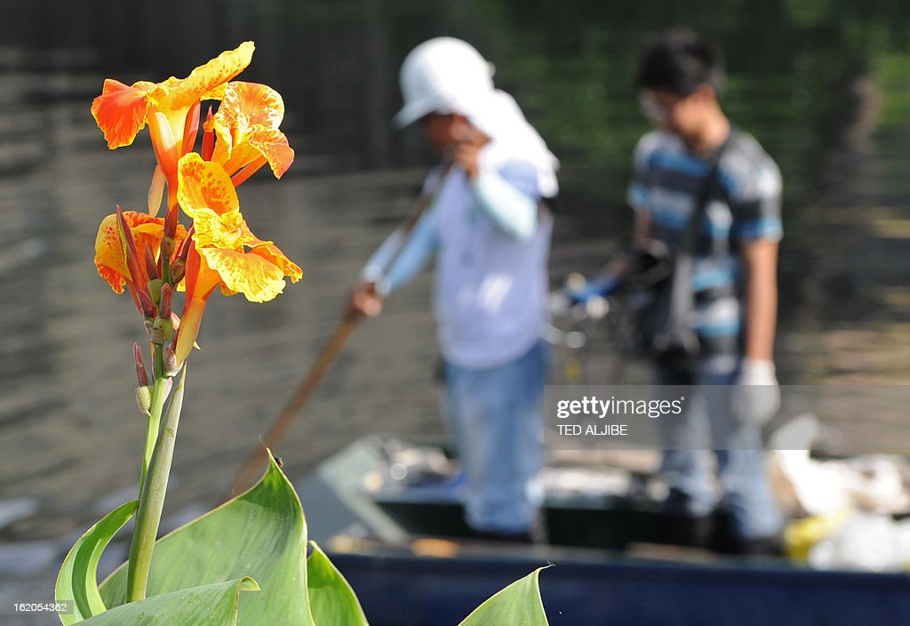 To Go With AFP story 'Philippines-Environment-Pollution-Water-Poverty' by Karl Malakunas In this picture taken on February 18, 2013, a flower blooms while a volunteer cleans and a student (R) from a nearby university prepares to lower his water monitoring instrument along Estero de Paco tributary in Manila. At Estero de Paco, a 2.9-kilometre (1.8-mile) tributary that a few years ago was one of the most polluted in the city, shanty homes have been replaced with tree-lined boardwalks while water-treatment machines now nestle amid plants. AFP PHOTO/TED ALJIBE