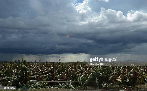 To go with AFP story PhilippinesweathertyphoonfarmFOCUS by Jason Gutierrez In a picture taken on December 8 a rain cloud hangs near a flattened...
