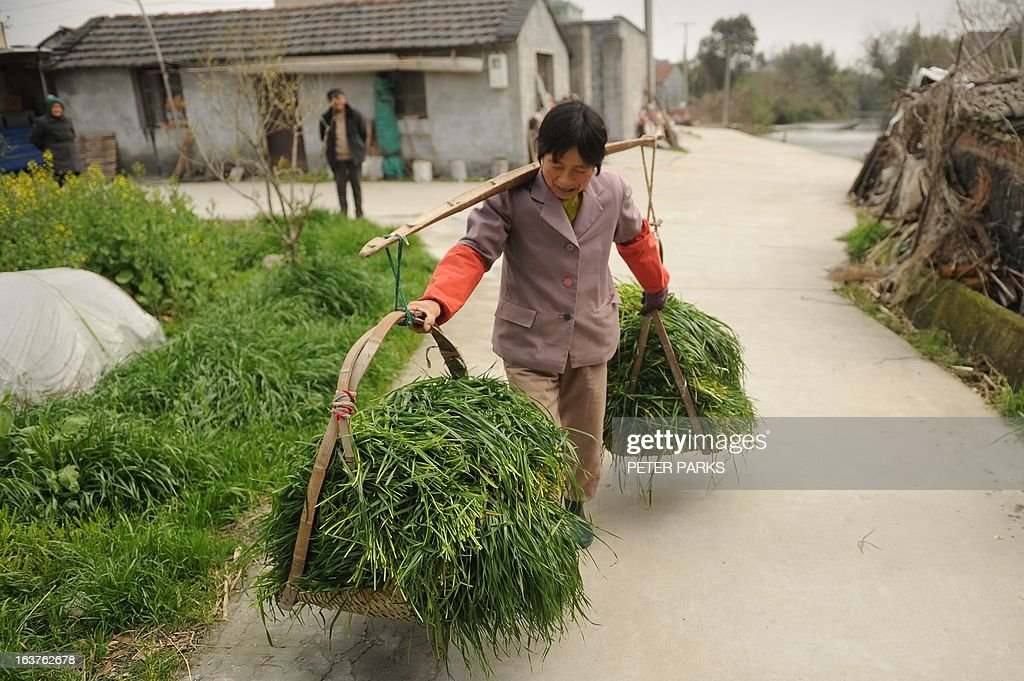 To go with 'China-farm-pollution-food-safety,FOCUS' by Bill Savadove This photo taken on March 14, 2013 shows 57 year-old pig farmer Pan Juying carrying grass to feed her pigs on her farm in Jiaxing in China's eastern Zhejiang province. Thousands of dead pigs in a Shanghai river have cast a spotlight on China's poorly regulated farm production, with the country's favourite meat joining a long list of food scares. AFP PHOTO/Peter PARKS