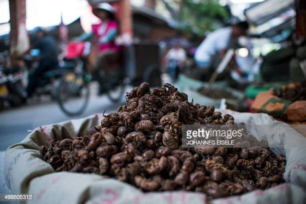 To go with ChinatraditionhealthawardNobelFOCUS by Rebecca Davis and Ludovic Ehret This picture taken on June 21 2015 shows a bag of insects used as...