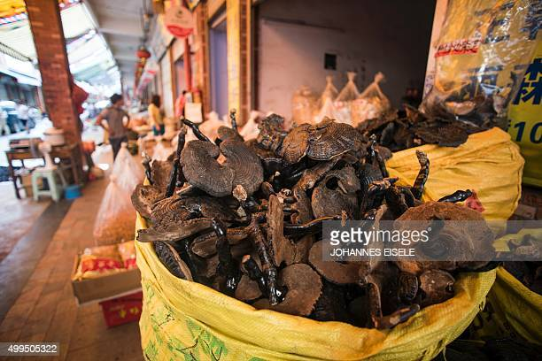 To go with ChinatraditionhealthawardNobelFOCUS by Rebecca Davis This picture taken on June 21 2015 shows mushrooms used in Chinese traditional...