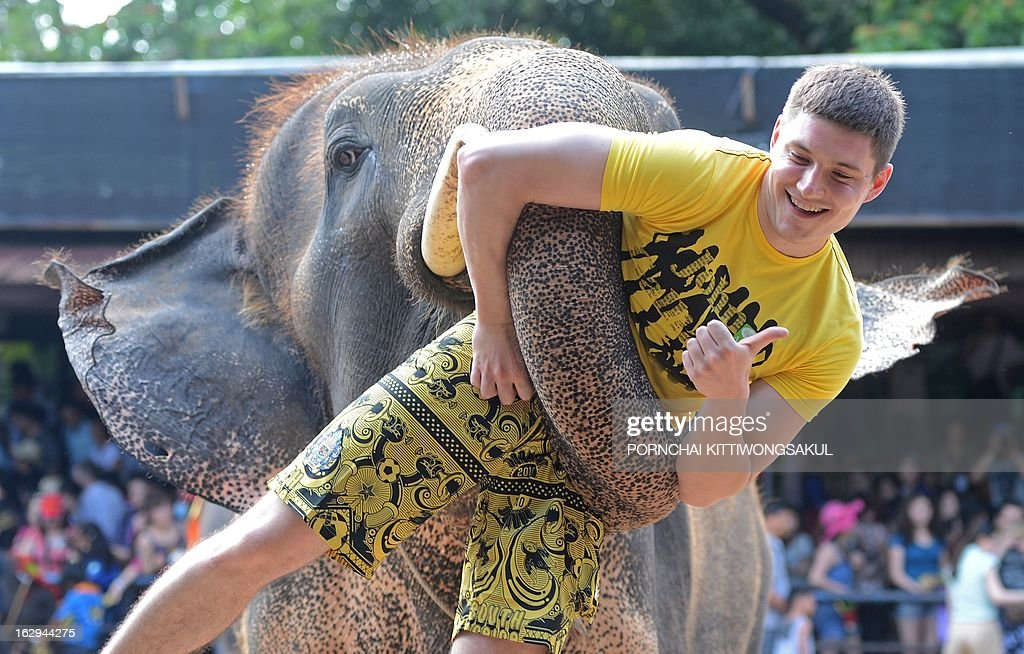 To go with 'Environment-wildlife-CITES-Thailand-tourism,FOCUS' by Amelie Bottollier-Depois In this picture taken on March 1, 2013 an elephant lifts a tourist during a show in Pattaya. Smuggling the world's largest land animal across an international border sounds like a mammoth undertaking, but activists say that does not stop traffickers supplying Asian elephants to Thai tourist attractions.