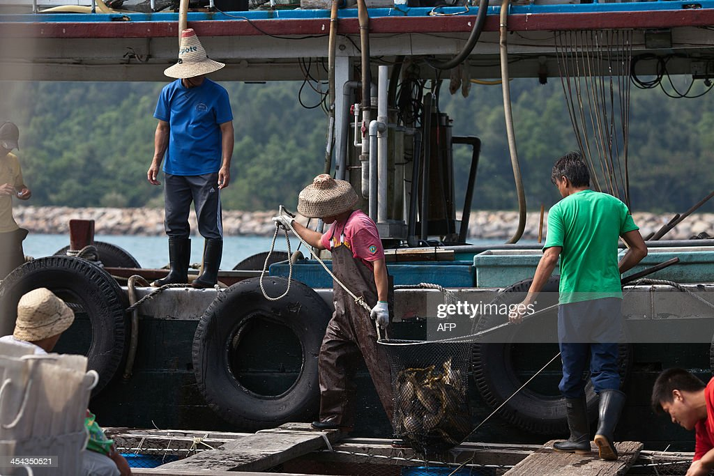 To go with Hong KongEconomyCultureFishingSocial FEATURE by Issam AHMED This picture taken on October 9 2013 shows fishermen transporting fish to a...