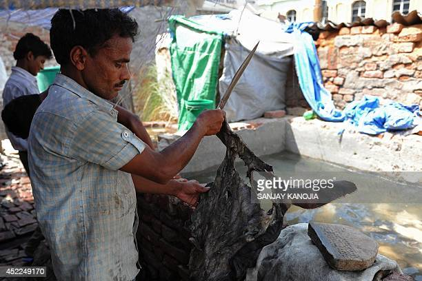 To go with IndiaenvironmentGangespollution by Bhuvan BAGGA An Indian labourer cuts out buffalo hide to be made into leather at a tannery in the...