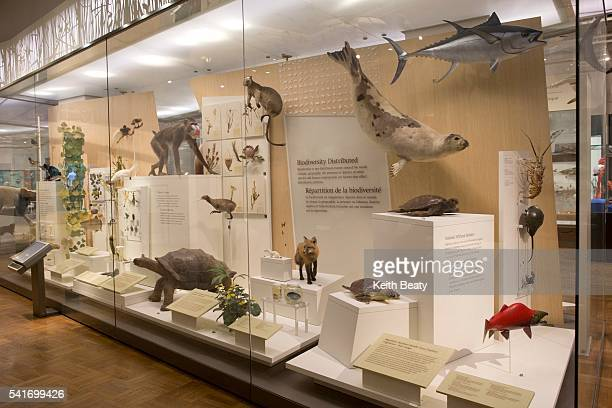 To go with profile of Joshua Basseches the new CEO of the Royal Ontario Museum Photo of the Life in Crisis Schad Gallery of Biodiversity