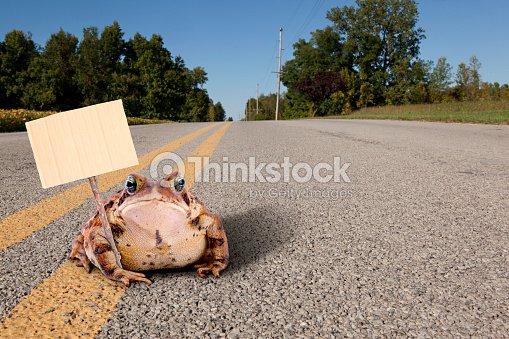toad on the road stock photo thinkstock