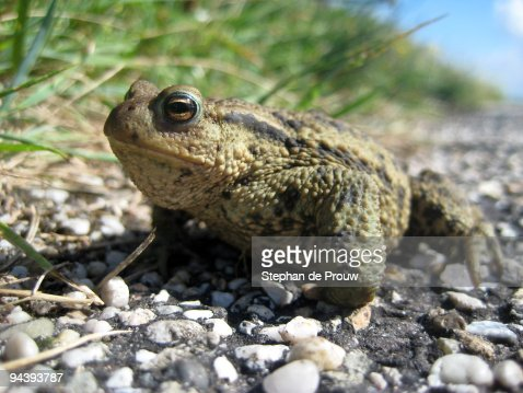 toad by the road images free download