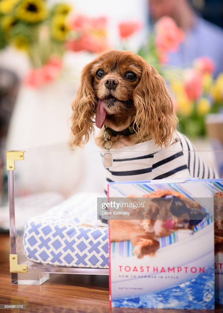 Toast poses at the Jonathan Adler Toasts @ToastMeetsWorld At The Launch Of TOASTHAMPTON on May 24, 2016 in New York City.