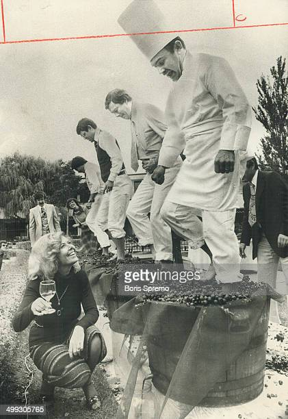 Toasting the new harvest Encouraged by Pauline Waite chef Claude Gambin gets both feel into act at grape stomping contest during Vendage'76 at Inn on...