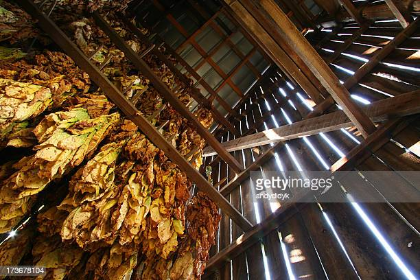 Tobacco Barn, Looking Up 01