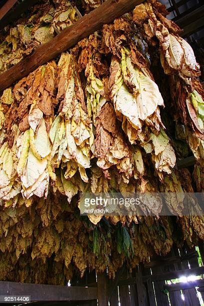 Tobacco Barn, Looking Up 04