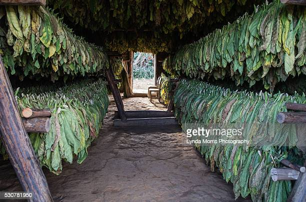 Tobacco Drying House, Vinales Valley, Vinales, Cuba