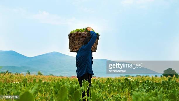 タバコの農家