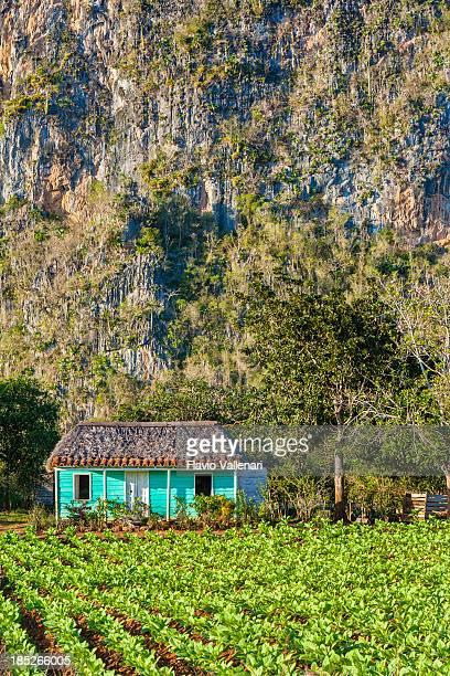 Tabac Plantation, Cuba