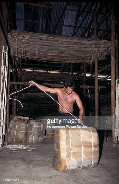Tobacco processing in Pinar Del Rio Province near Soroa Cuba