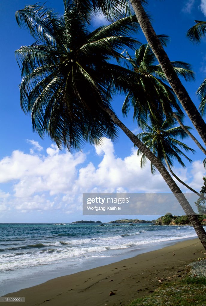 Tobago, Prince's Bay, Coconut Palm Trees On Beach.