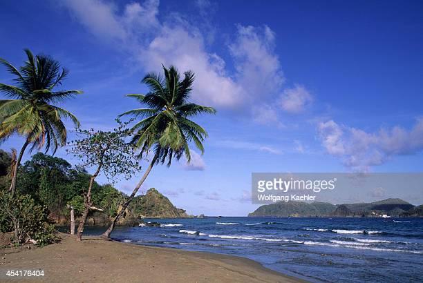 Tobago Speyside Beach Coconut Palm Trees