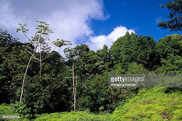 Tobago Tobago Reserve Rain Forest
