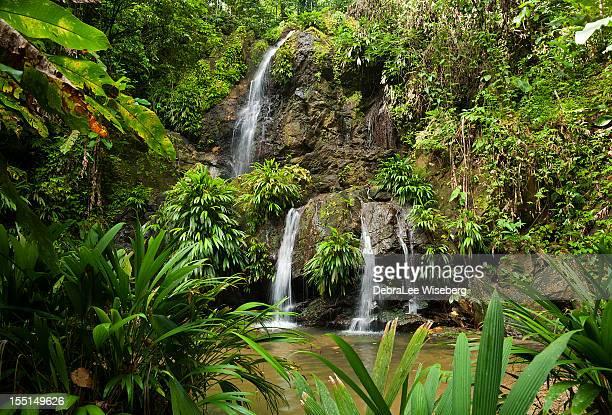 Tobago Waterfall Series