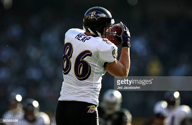 Todd Heap of the Baltimore Ravens catches a pass against the Oakland Raiders during an NFL game at OaklandAlameda County Coliseum on January 3 2010...