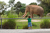 Little boy standing on his toes, watching elephant in a Zoo. Selective focus set on child.