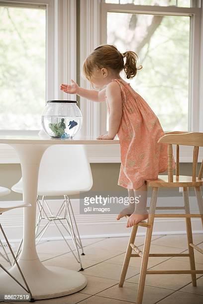 toddler feeding fish