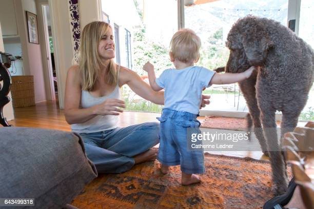 Toddler playing with a large dog
