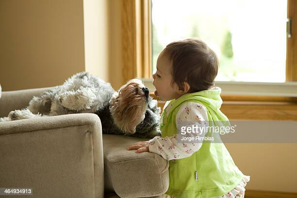 Toddler trying to lick a dog