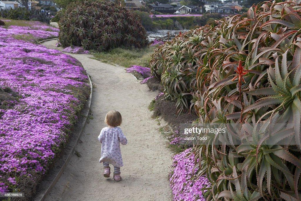 Toddler walking along flowery coastal trail