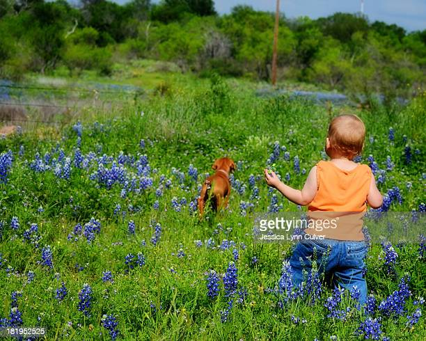 Toddler walking in Bluebonnets with Puppy
