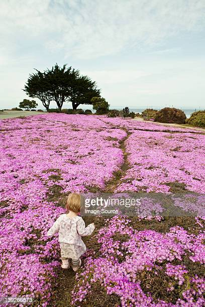 Toddler walking through pink flowers