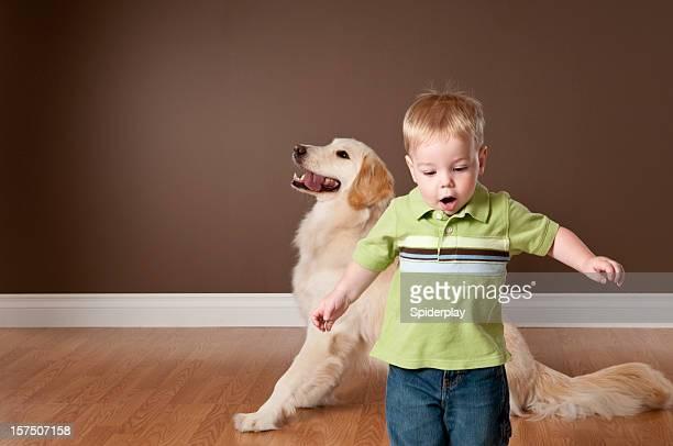 Toddller とゴールドレトリバー