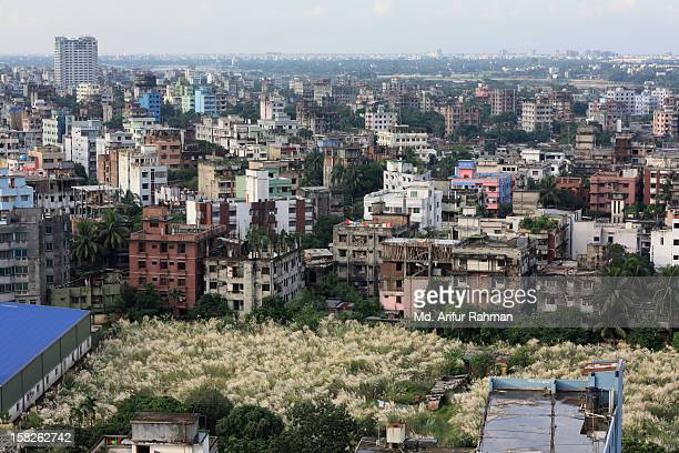 toetoe  in the Middle of Dhaka City
