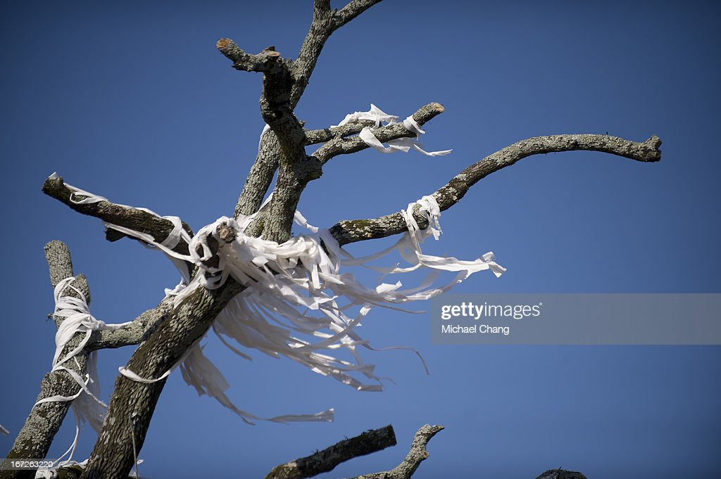 Toilet paper hangs from limbs of an oak tree as crews from the Asplundh tree service cut down the oak tree on April 23, 2013 at Toomer's Corner in Auburn, Alabama. Auburn University decided to remove the dying oaks after they were poisoned by a rival fan shortly after the 2010 Iron Bowl.