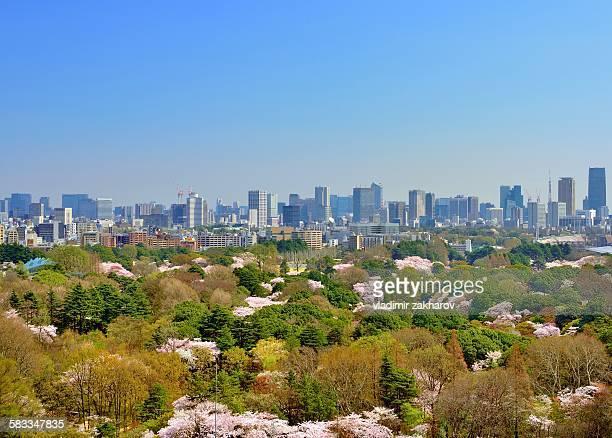 Tokyo skyline at spring morning
