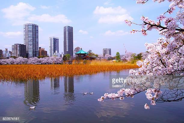 Tokyo, Spring