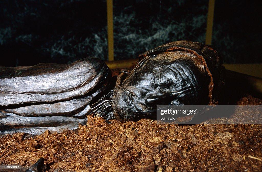 Tollund Man mummy (200 BC) at Silkeborg Museum. : Stock Photo