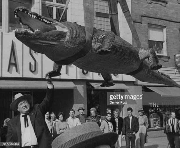Tom Bolack Supervises Lowering of Stuffed Crocodile From Denver Taxidermy Shop The former governor of New Mexico shot the 2000pound maneater while on...