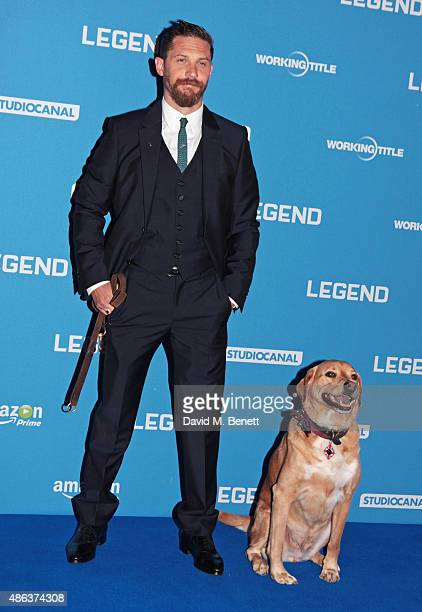 Tom Hardy and dog Woody attend the UK Premiere of 'Legend' at Odeon Leicester Square on September 3 2015 in London England