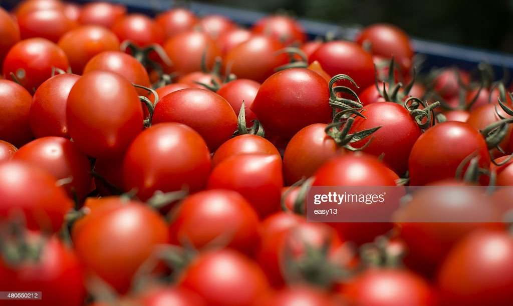 Tomato Close-up : Stock Photo