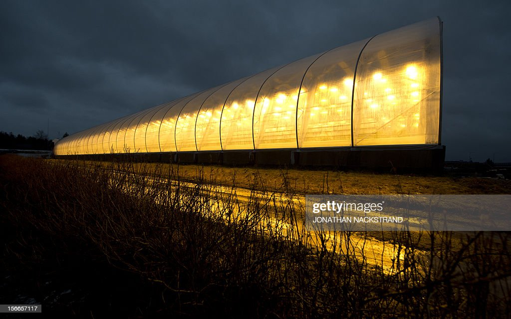 A tomato greenhouse is reflected on ice at the Nybyn village, north of Lulea, in Swedish Lapland on November 18, 2012. AFP PHOTO/JONATHAN NACKSTRAND
