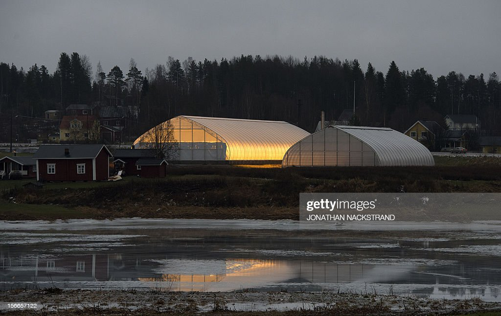 Tomato greenhouses are seen at the Nybyn village, north of Lulea, in Swedish Lapland on November 18, 2012. AFP PHOTO/JONATHAN NACKSTRAND